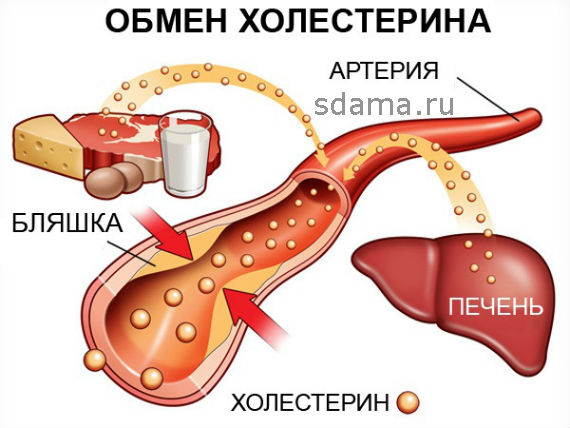 снизить холестерин в крови